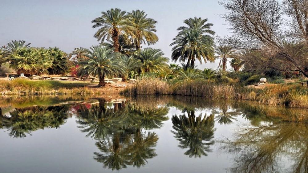 Szapír Park, az Aravah sivatag oázisa