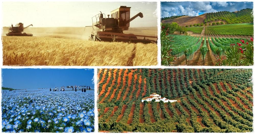 A mezőgazdasági kultúrák előfordulási gyakorisága a Bibliában