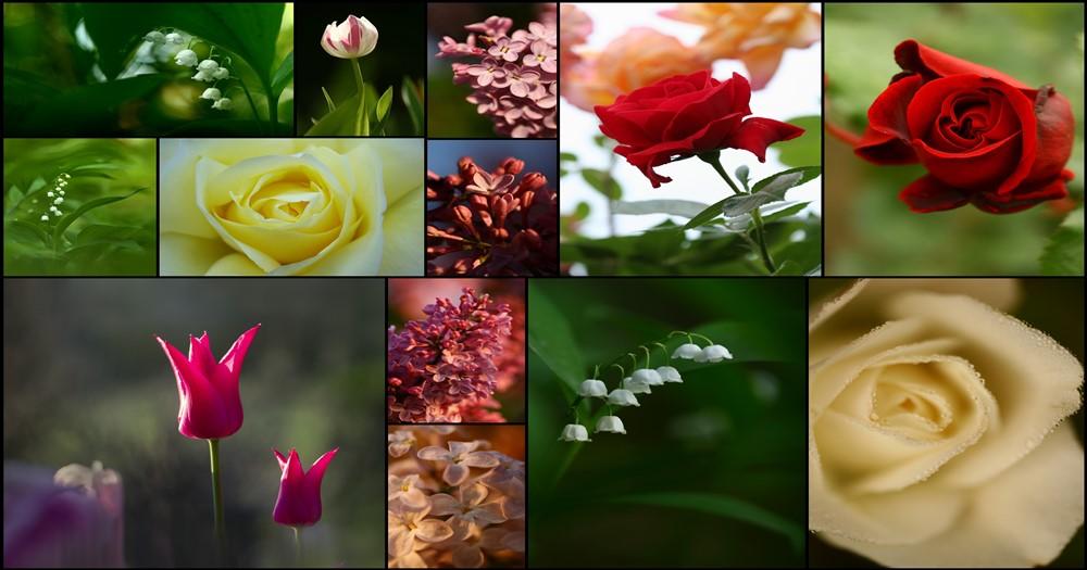 Virágszépségverseny