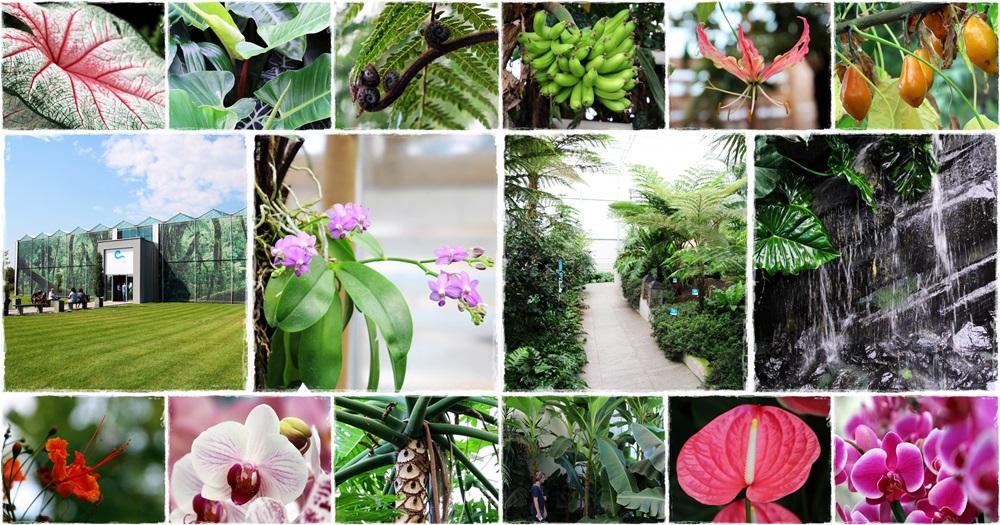 Dobronaki Trópusi Kert és Orchidea Farm