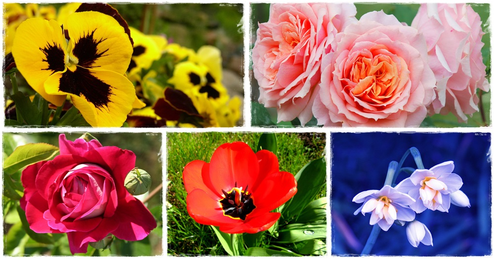 Ismered-e a botanikus nyelvjárást?