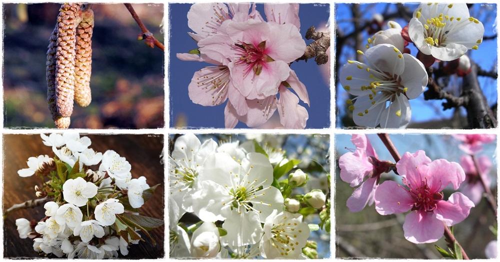 Virágba borultak a gyümölcsfák! - 1. rész
