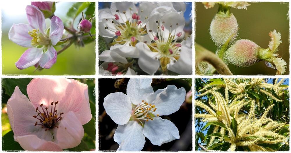 Virágba borultak a gyümölcsfák - 2. rész