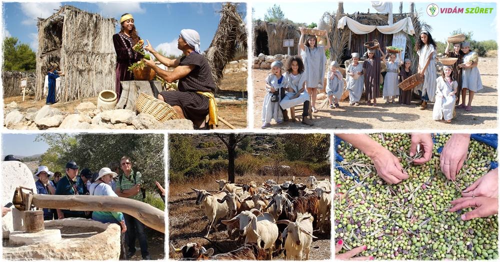 Neot Kedumim – a világ egyetlen bibliai tájvédelmi körzete