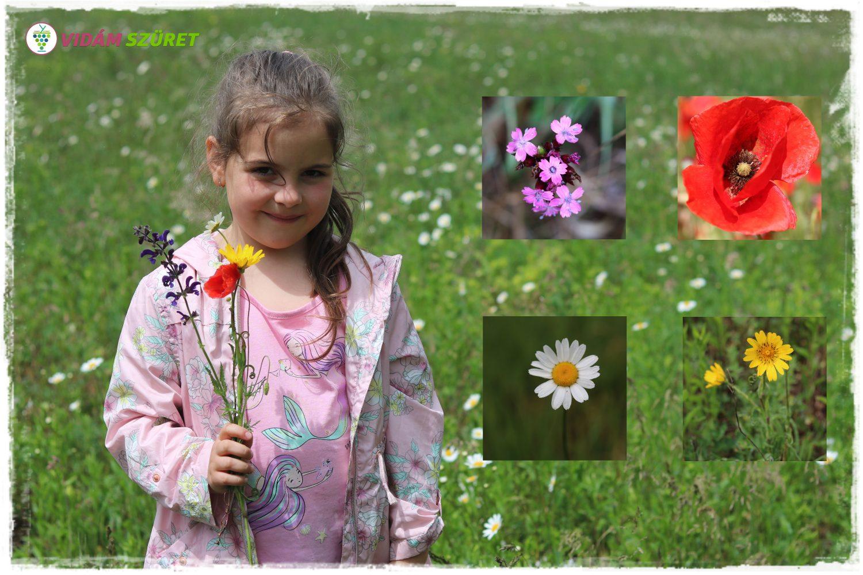 """""""Szedd a tavasz virágait egy csokorba össze..."""""""