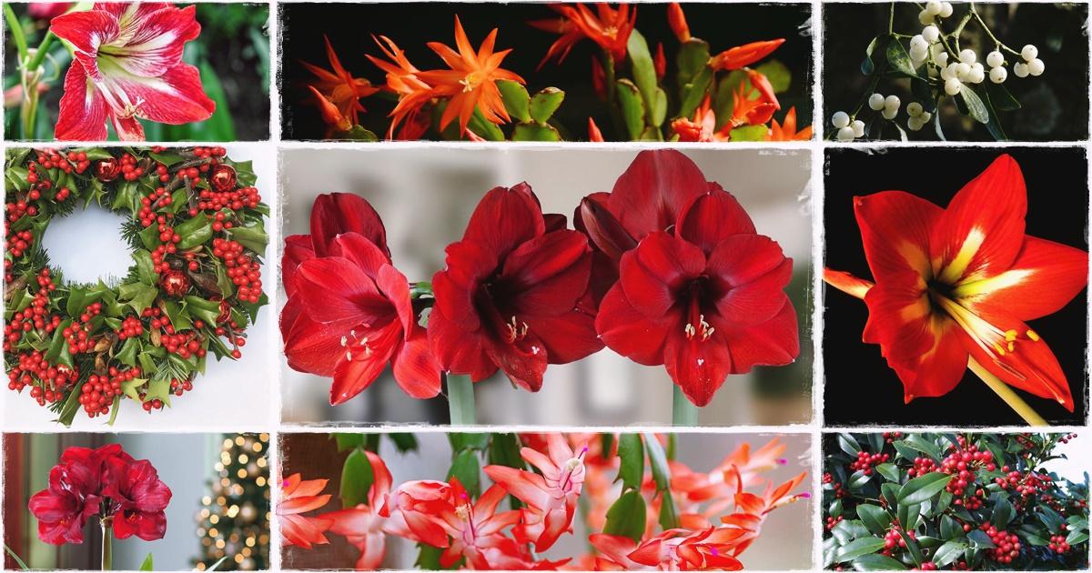 Négy csodás növény, melyek segítenek ünnepélyesebbé tenni a karácsonyt!